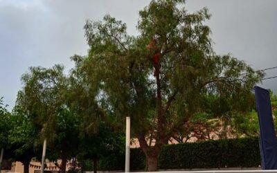 Inactivación y retirada nido secundario Avispa Velutina